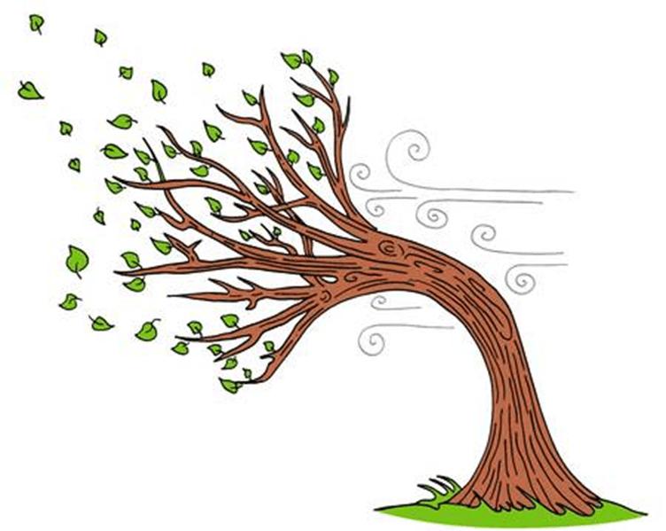 картинки как деревья гнет ветер убивают задание остается